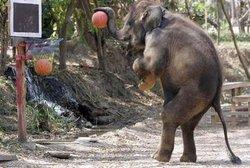 elephant_bball.jpg